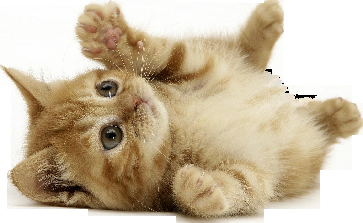 Cat PNG - 23026