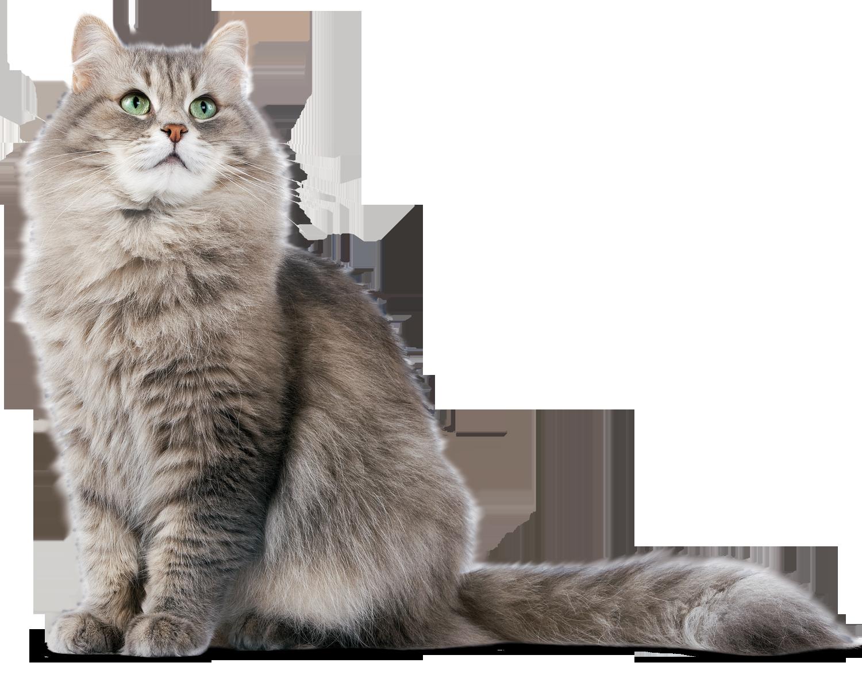 Cat PNG - 23016
