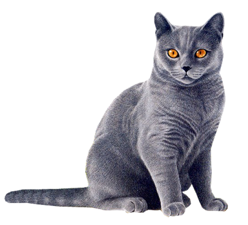 Cat PNG - 23021