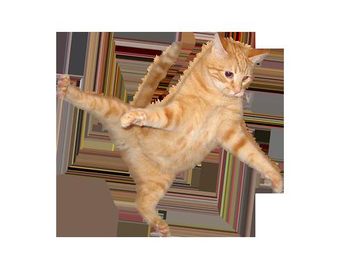 Cat PNG - 15586