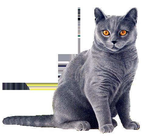 White cat PNG Transparent ima