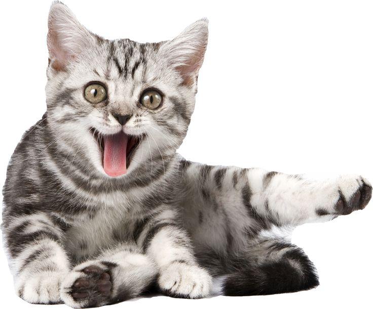 Cat PNG - 23034