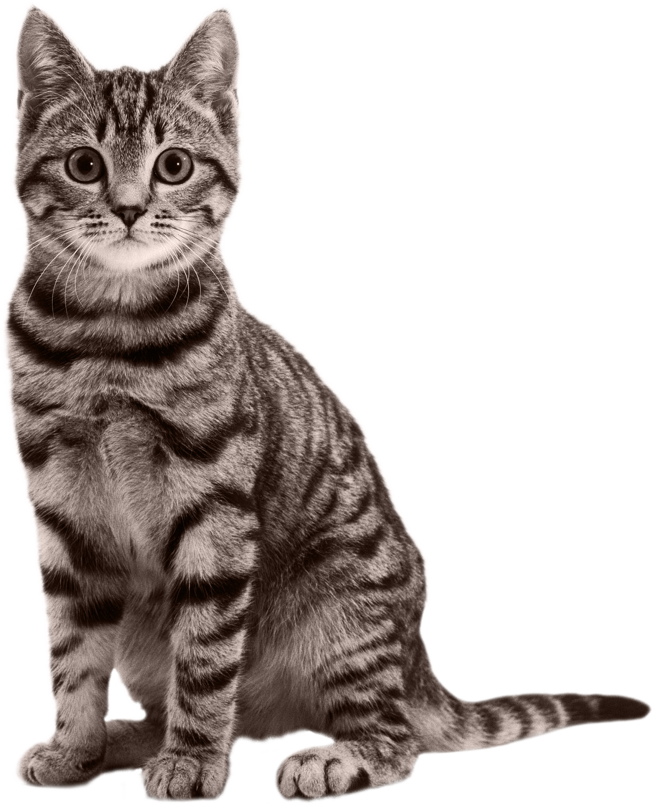 Sitting Small Cat Png image #40363 - Cat PNG