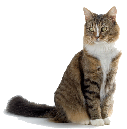 Collection of HQ Cat PNG. | PlusPNG