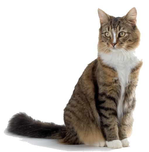 Success cat.png - Cat PNG