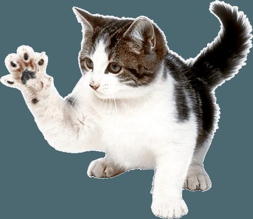 Cat PNG - 23028