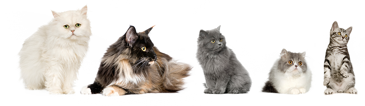 Cat Vet PNG-PlusPNG.com-1175 - Cat Vet PNG