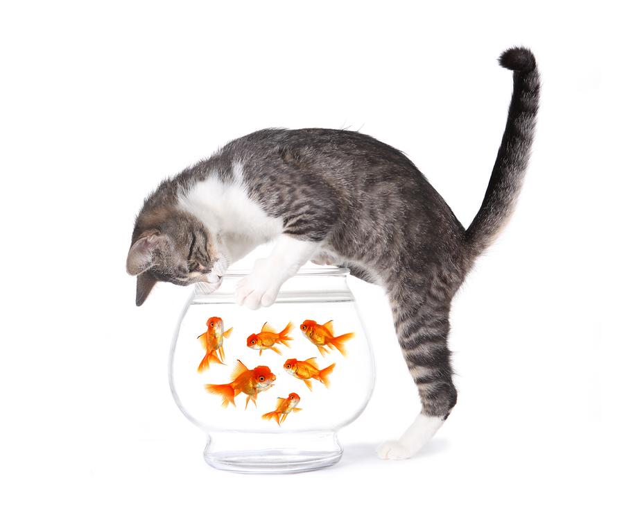 Cat Food Recommendations - Cat Vet PNG