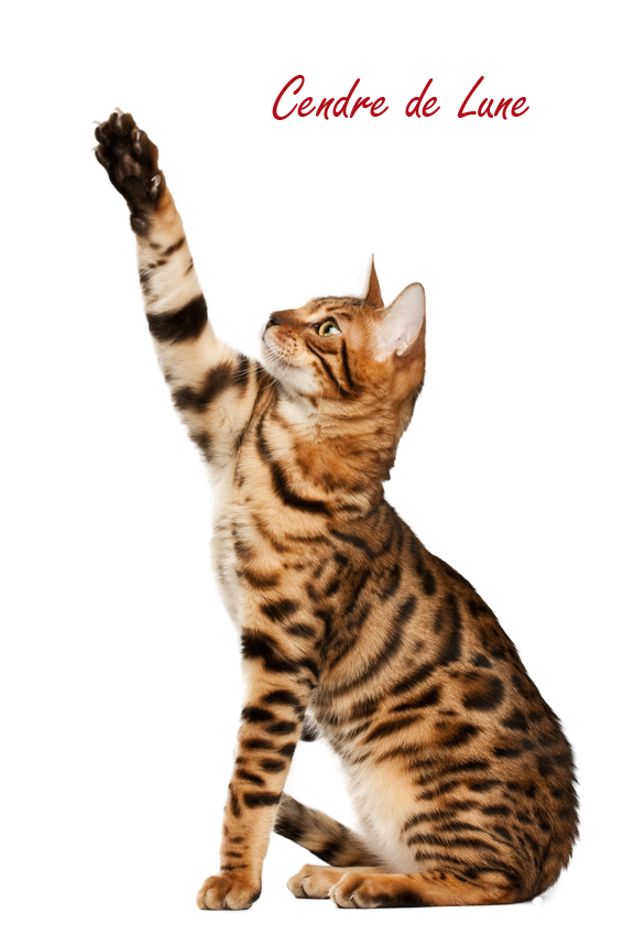 Cat PNG by cendredelune PlusPng.com  - Cat Vet PNG