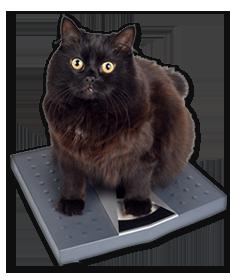 Cat Veterinary Services - Cat Vet PNG