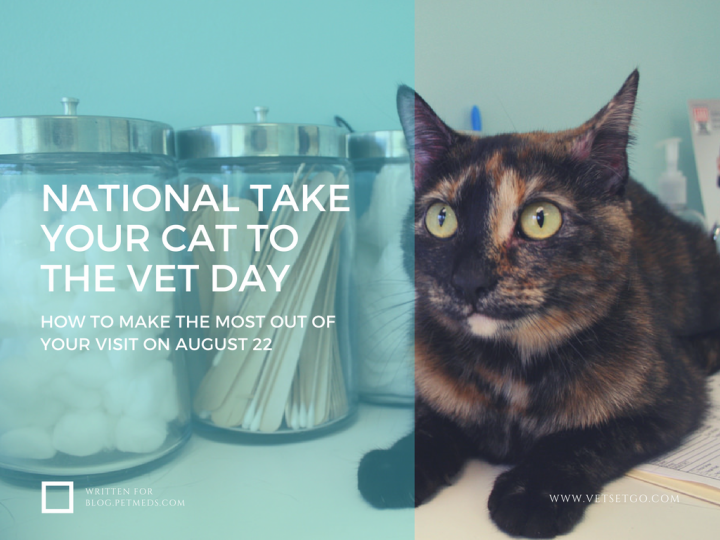 Learn how to make the most out of your catu0027s veterinary visit - Cat Vet PNG
