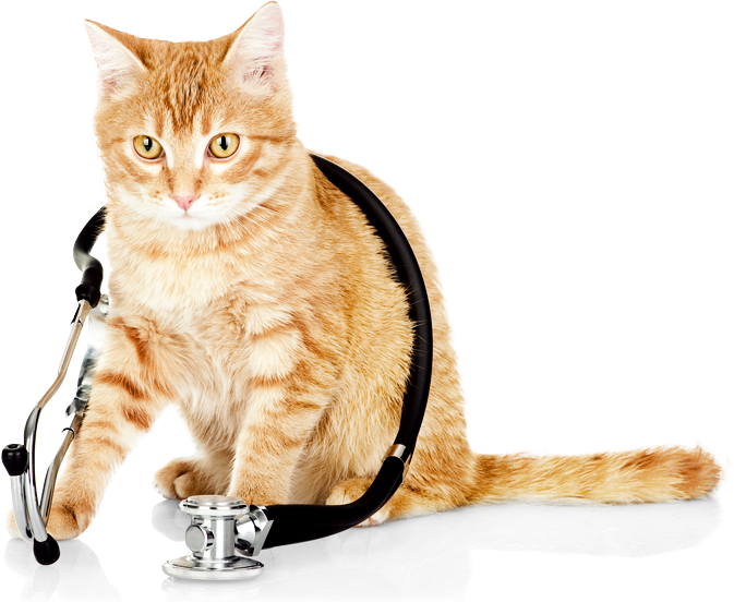 Cat Vet PNG