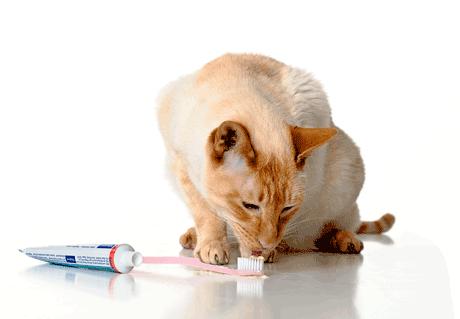 Toothbrush Kitty - Cat Vet PNG