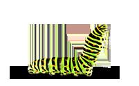 Caterpillar PNG - 1780