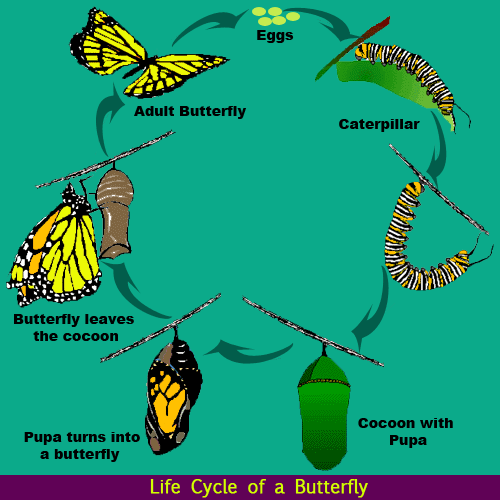 Caterpillar Into Butterfly PNG - 157058