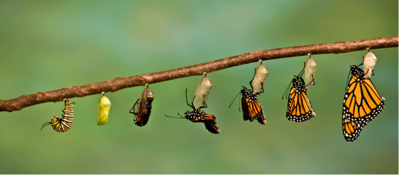 Caterpillar Into Butterfly PNG - 157050