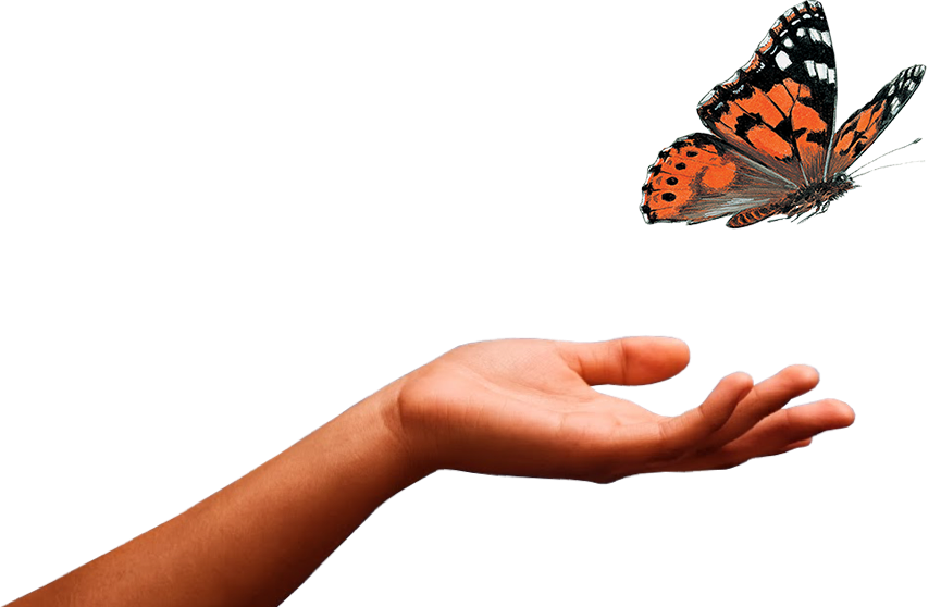 Caterpillar Into Butterfly PNG - 157056