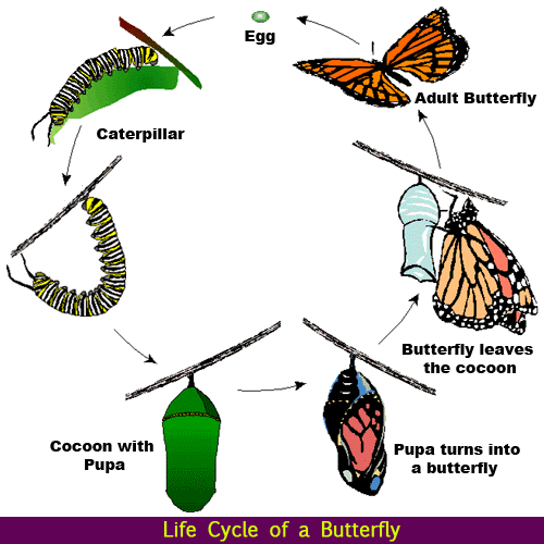 Caterpillar Into Butterfly PNG - 157063