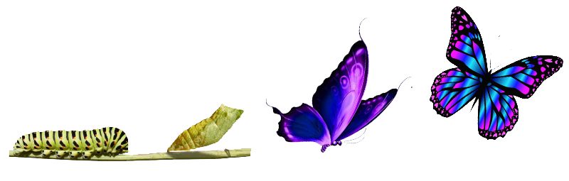 Caterpillar Into Butterfly PNG Transparent Caterpillar Into ...