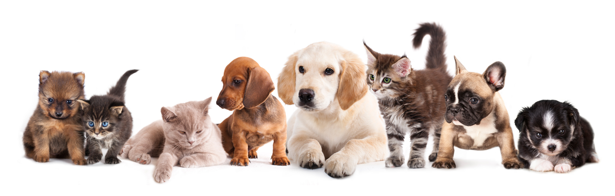 Cats And Dogs PNG HD - 146628