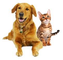Cats And Dogs PNG HD - 146620