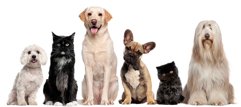 Cats And Dogs PNG HD - 146624