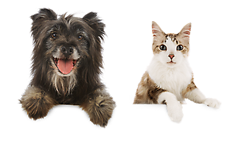 Cats And Dogs PNG HD - 146622