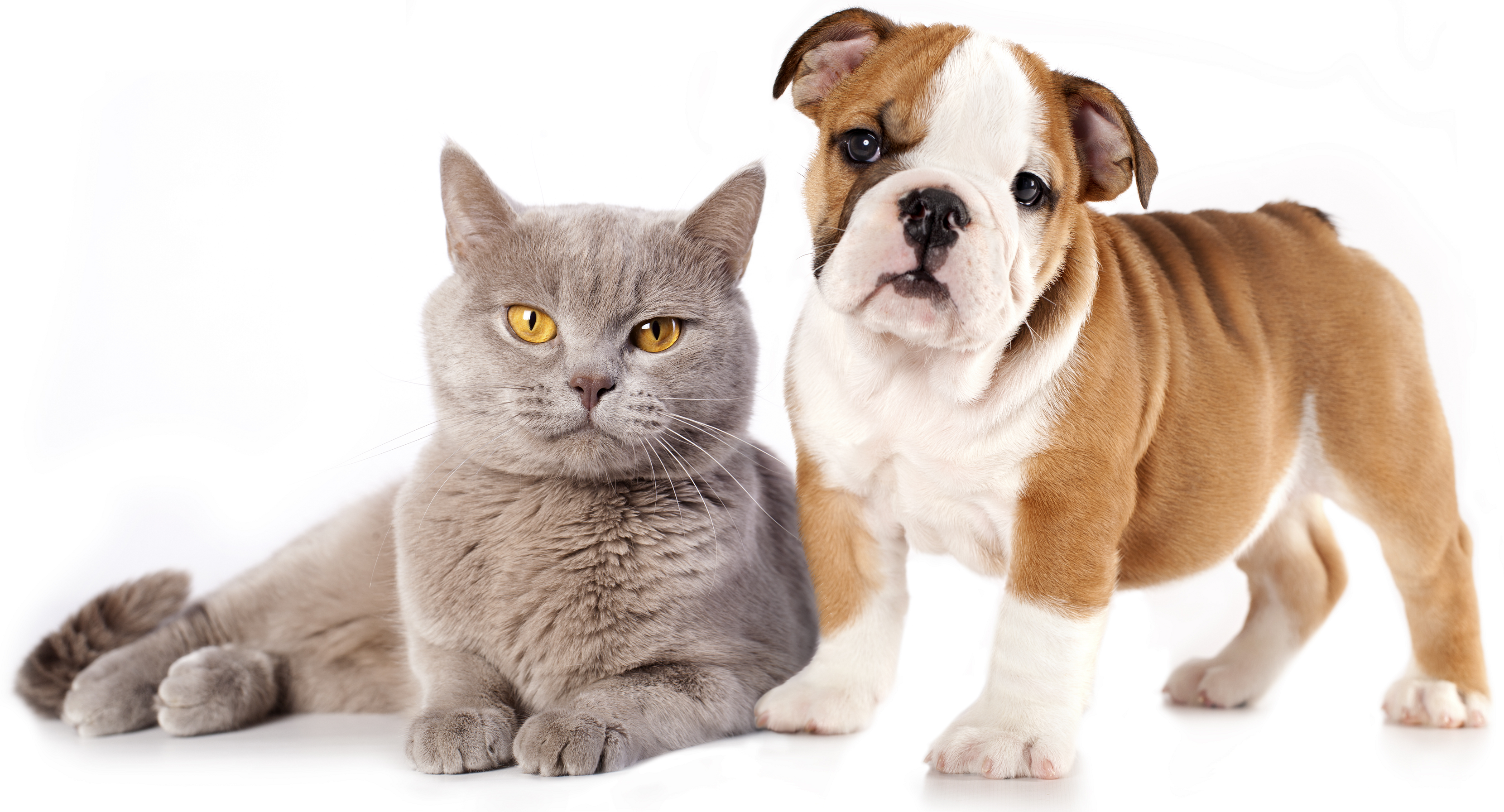 Cats And Dogs PNG HD - 146612
