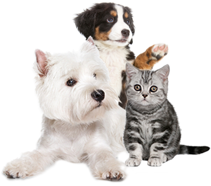 Cats And Dogs PNG HD - 146623