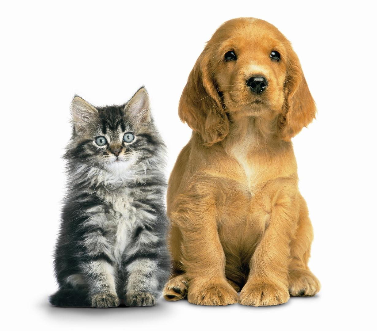 Cats And Dogs PNG HD - 146617