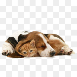 Cats and dogs dogs, Cat, Animal, Dogs PNG Image - PNG HD Dogs - Cats And Dogs PNG HD