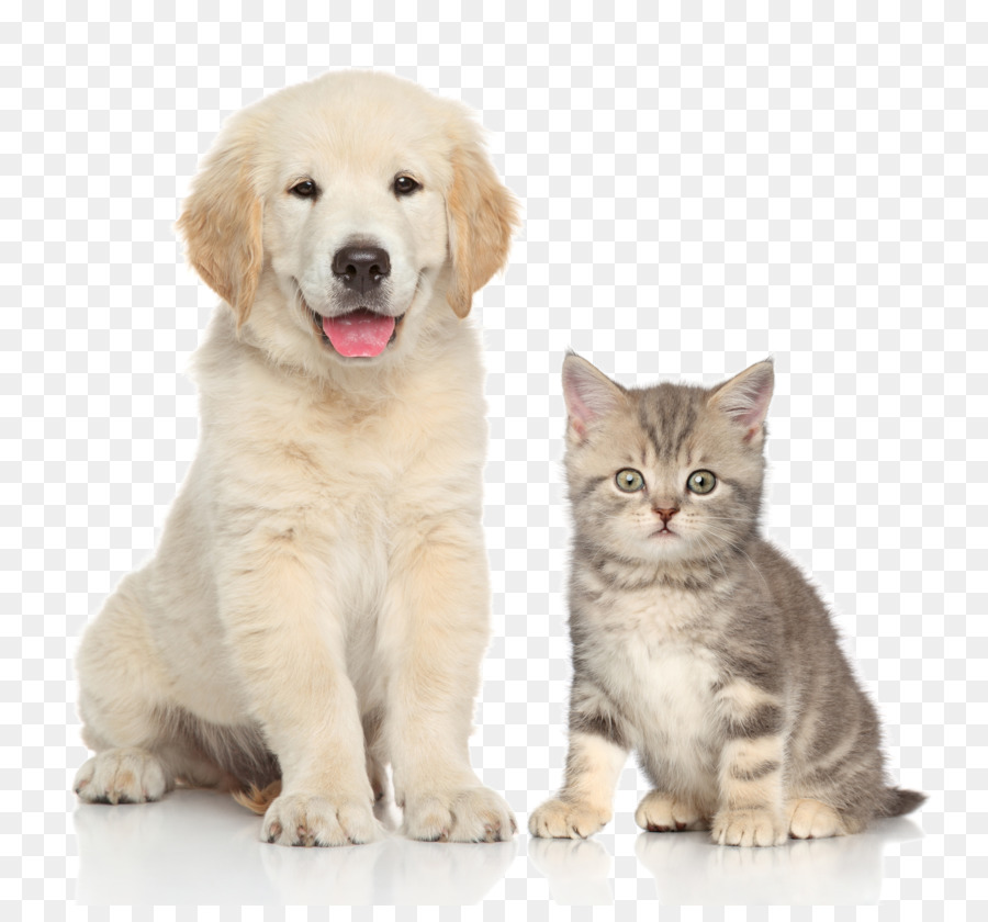 Dog Cat Kitten Pet sitting - Pet cat and dog - Cats And Dogs PNG HD