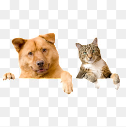 Cats And Dogs PNG HD - 146611