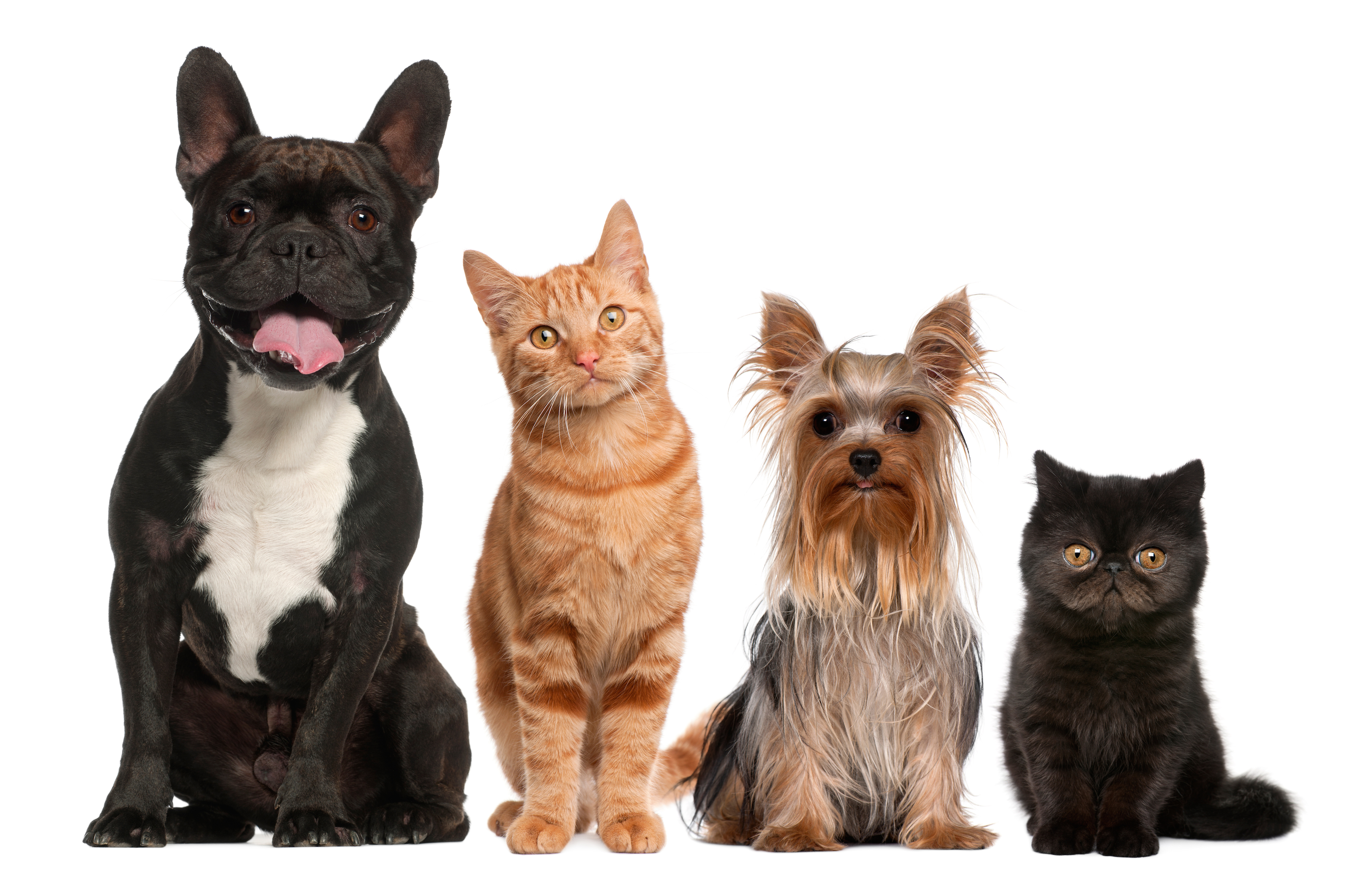Family Pets - Cats And Dogs PNG HD