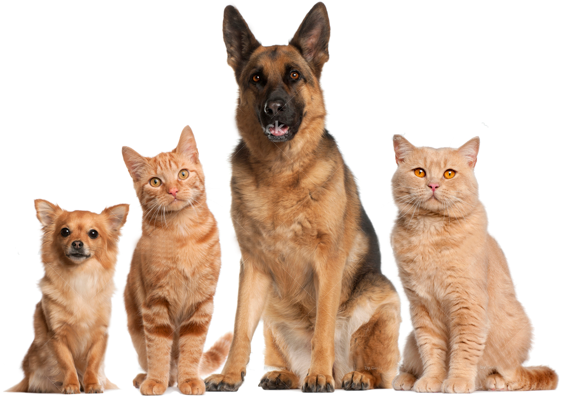 Cats And Dogs PNG HD - 146618