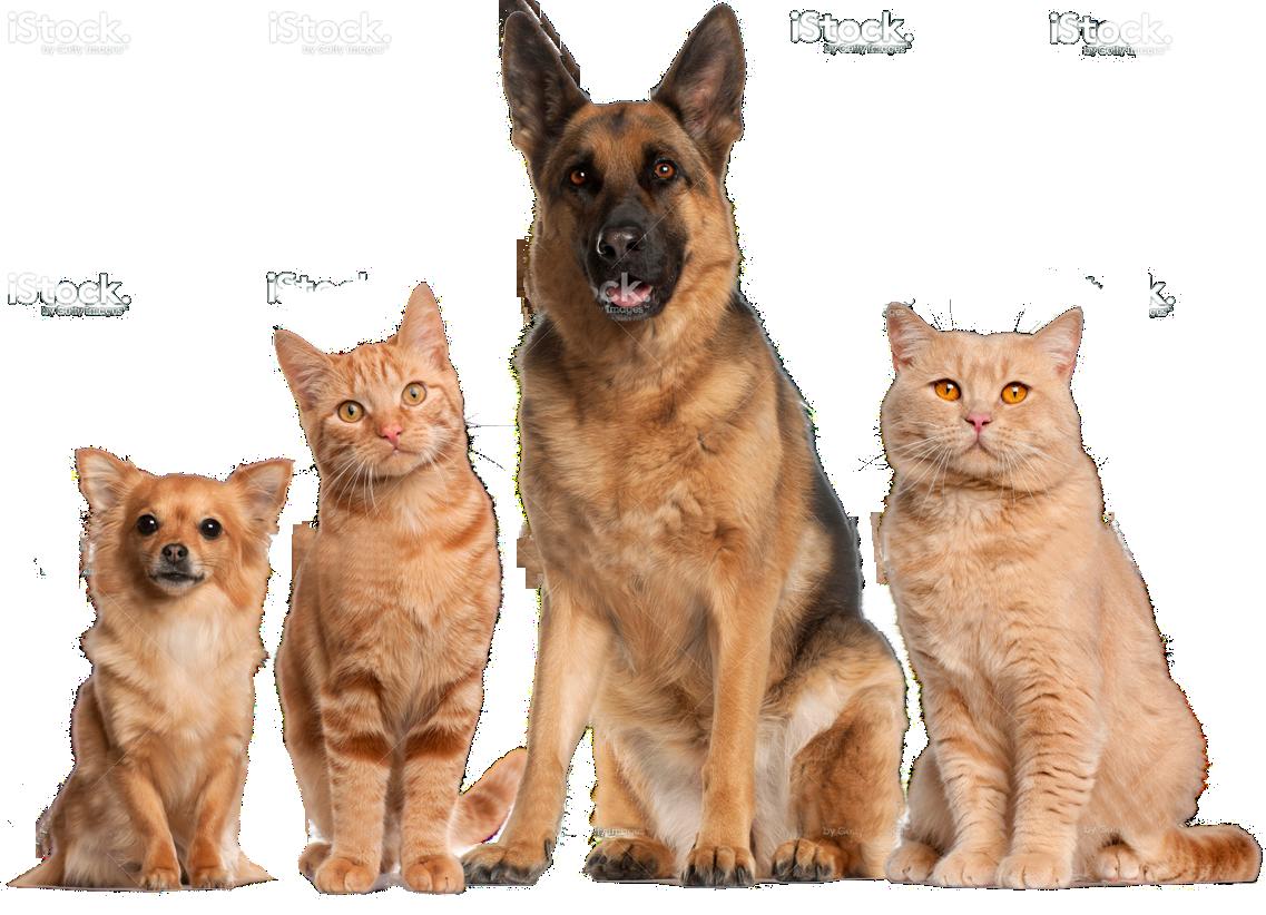 Kıbrıs Kedi Köpek Maması - Cats And Dogs PNG HD