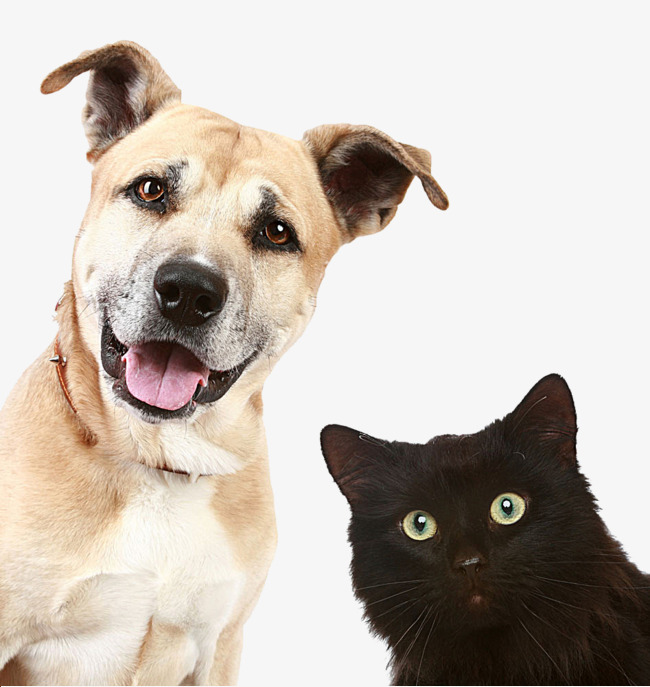 Cats And Dogs PNG HD - 146616