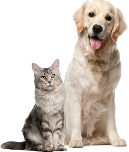 Cats And Dogs PNG HD - 146613