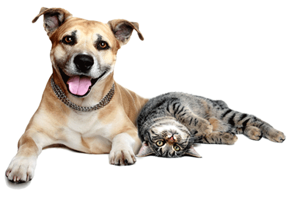 Cats And Dogs PNG HD - 146610