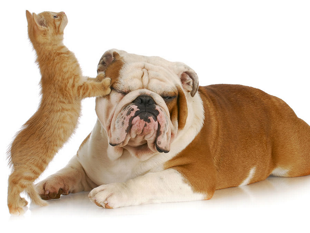 Protect those fur kids of yours! - Cats And Dogs PNG HD
