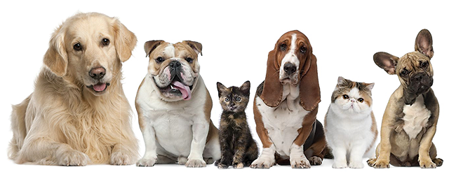Row of cute dogs and cats with questioning expresions - Cats And Dogs PNG HD