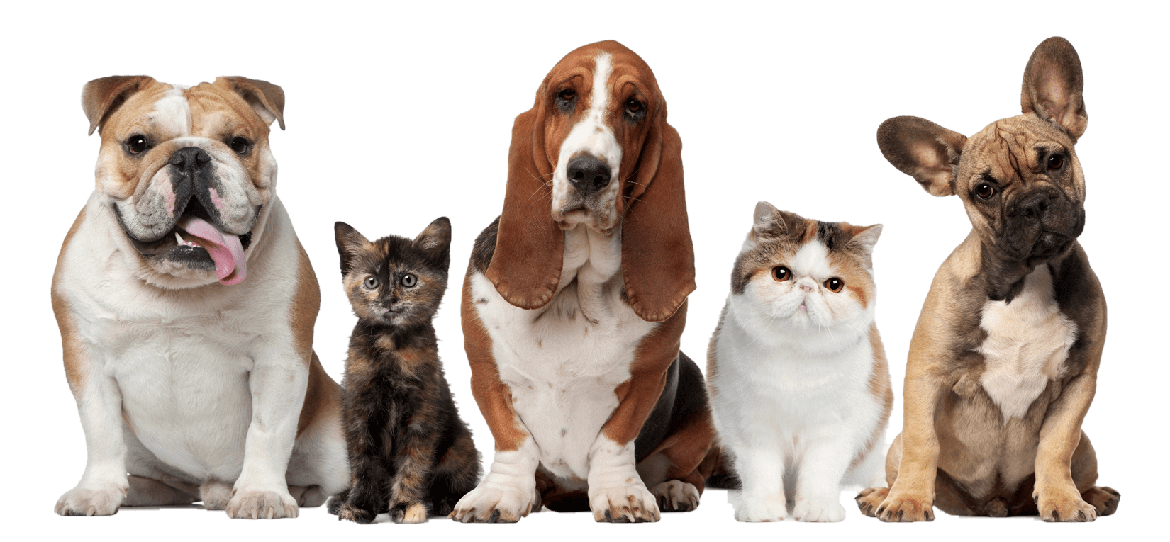 Cats And Dogs PNG HD - 146609