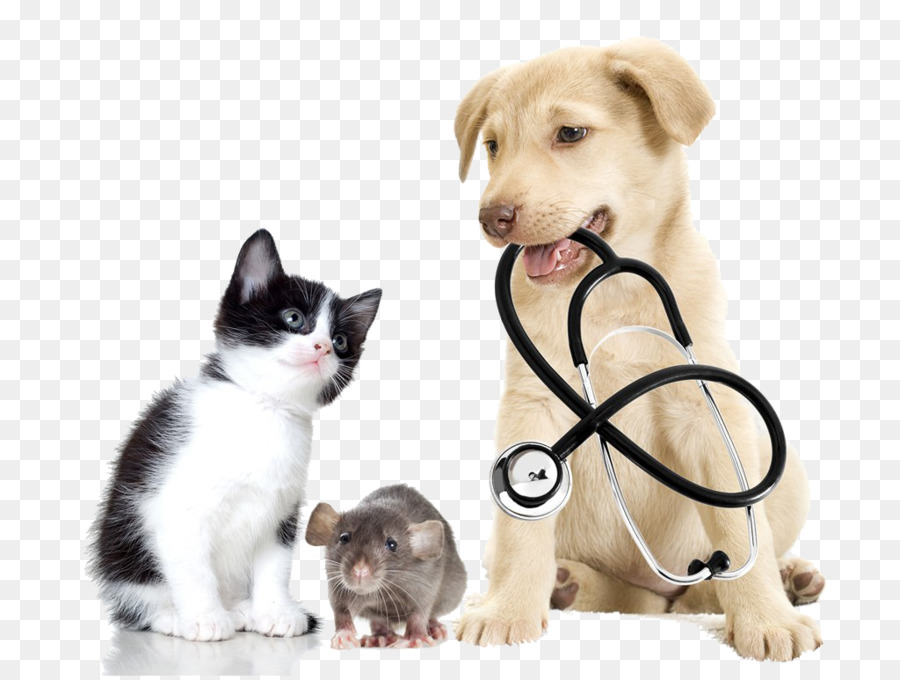 Veterinarian Veterinary medicine Pet Clinique vxe9txe9rinaire - Cats and  dogs - Cats And Dogs PNG HD