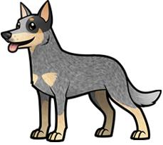 American Staffordshire Terrier   · Logo Australian Cattle Dog - Cattle Dog PNG