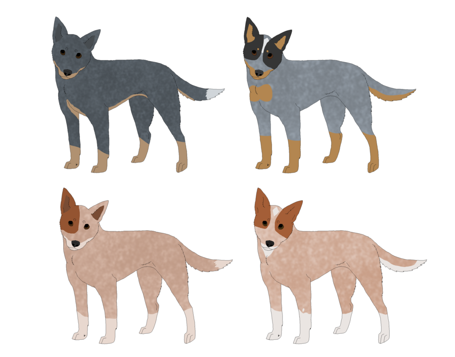 Cattle Dog Adoptables by NightCur PlusPng.com  - Cattle Dog PNG