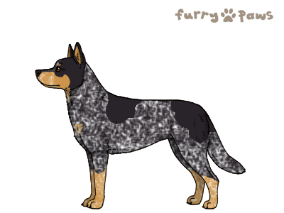 File:Australian cattle dog.png - Cattle Dog PNG