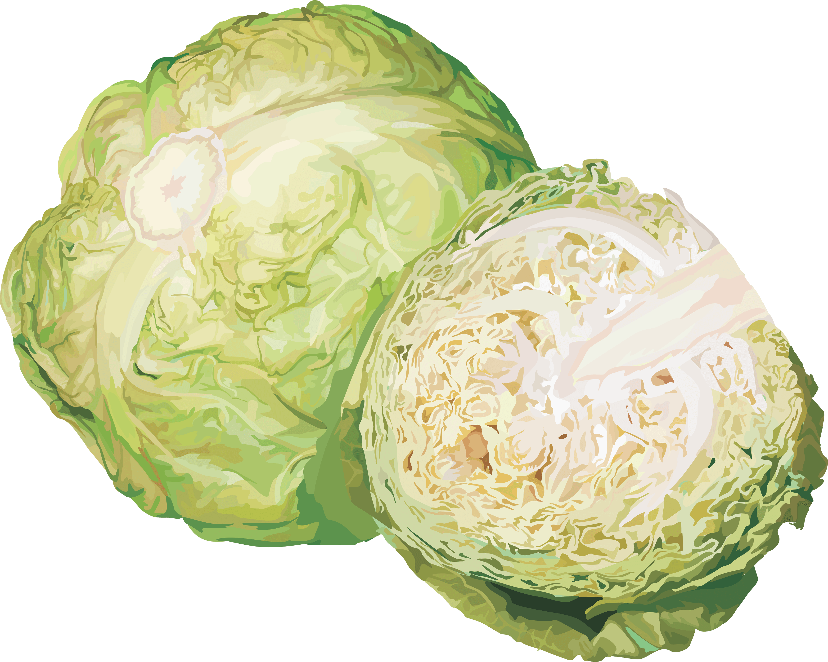 Similar Cabbage PNG Image - Cauliflower HD PNG