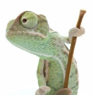 . PlusPng.com Cameron-the-chameleon.png PlusPng.com  - Chameleon PNG