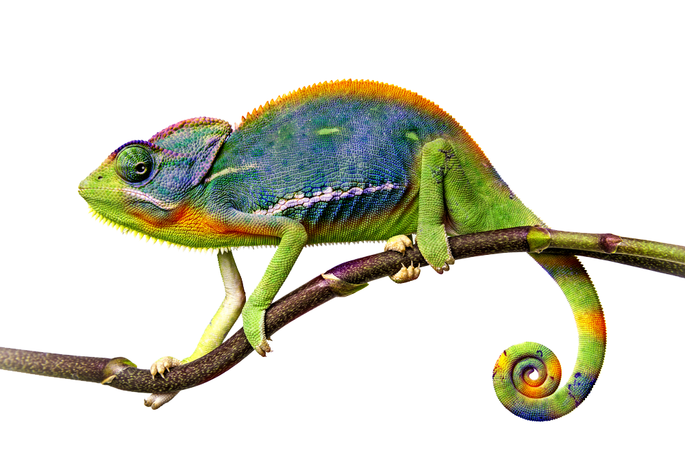 Chameleon PNG File - Chameleon PNG
