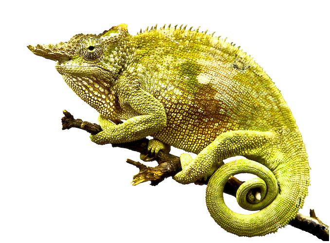 Chameleon PNG Photo - Chameleon PNG